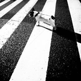 Asakusa Dog